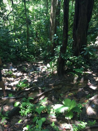 Refugio Nacional Mixto de Vida Silvestre Romelia: photo1.jpg