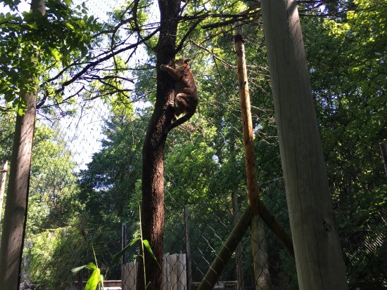 Western North Carolina Nature Center : The cougar jumped up the tree!