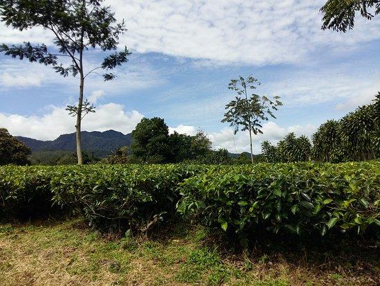 茶花園渡假村張圖片