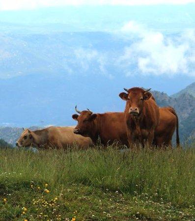 Taurinya, Frankrig: Estive à Prat Cabrera 1700 m