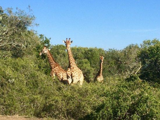 Amakhala Game Reserve, Sudafrica: photo5.jpg