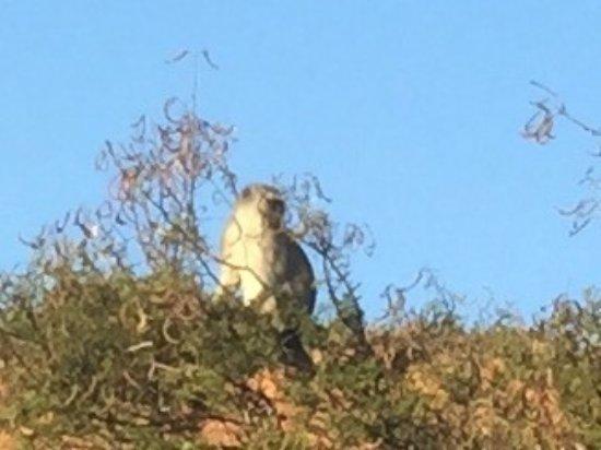 Заповедник Амакала, Южная Африка: photo9.jpg