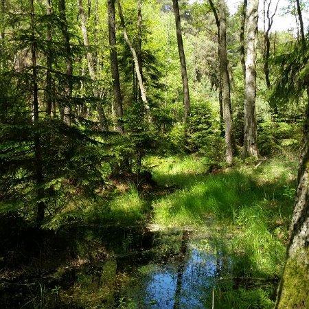 Cekcyn, Polônia: Piękna natura