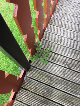 Crowhurst Park: weeds growing through decking