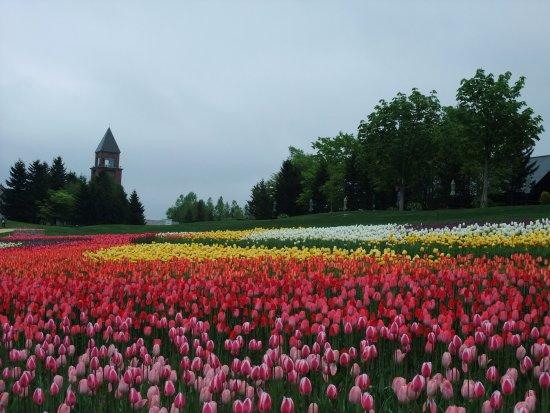 Takino Suzuran Hillside National Park: Tulips in Chushin Zone in May