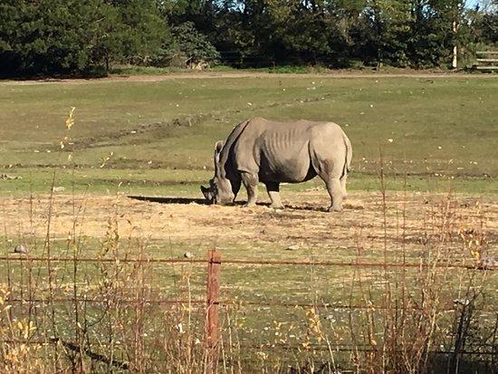 Orana Wildlife Park: photo4.jpg