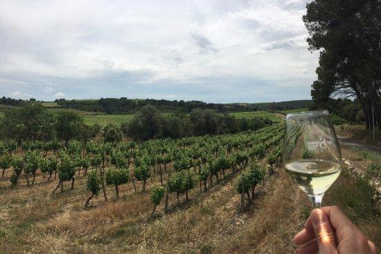 Cessenon-sur-Orb, ฝรั่งเศส: Vineyard view at Cazal Viel Estate