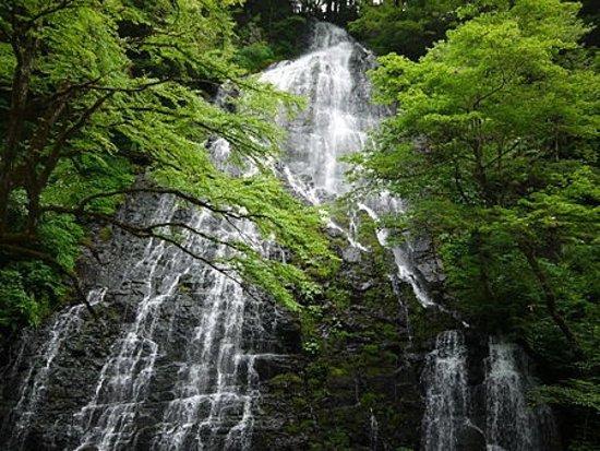 Ikeda-cho, Japan: 初夏の姿