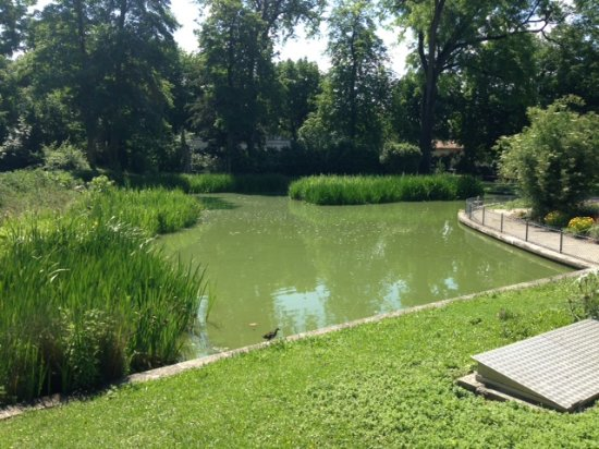 one of the ponds picture of jardin public de cognac