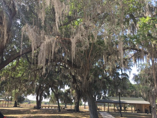 Boggy Creek Resort and RV Park: Old tree