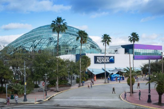 The florida aquarium tampa all you need to know before Tampa aquarium military discount