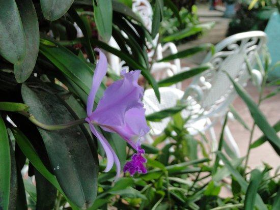 Villa Haydee Chiroles: Jardin
