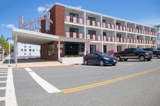 Flamingo motel ocean city md omd men och for Motel one wellness