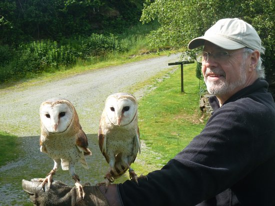 Machynlleth, UK: Twin barn owls