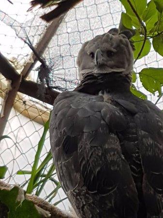 Cota, Colombia: Bioparque la reserva