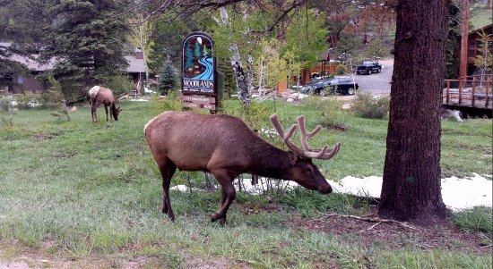 The Woodlands on Fall River: You can see the elk in front is right by the Woodlands sign.