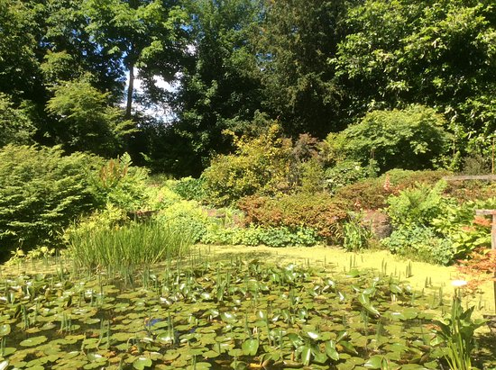 Ardleigh, UK: An 'oasis' of water lilies (if such a thing exists).
