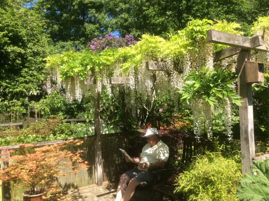 Ardleigh, UK: Lovely spot with Snow Shower Wisteria