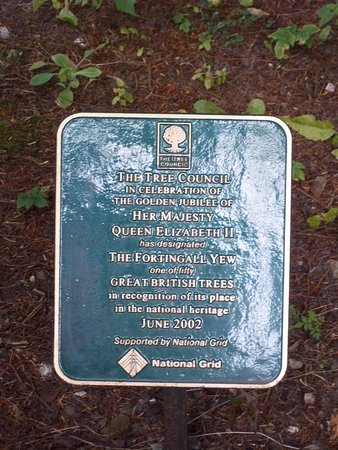 Fortingall Yew: Commemorative Plaque for the Forthingall Yew being included in the 50 Great British Trees.