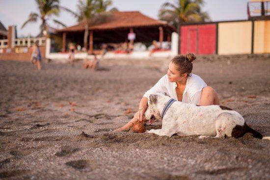Bigfoot Beach Hostel: Lola our pet