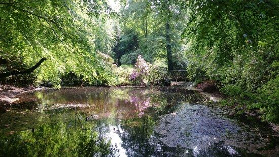 Macclesfield, UK: Pretty pond on the woodland walk
