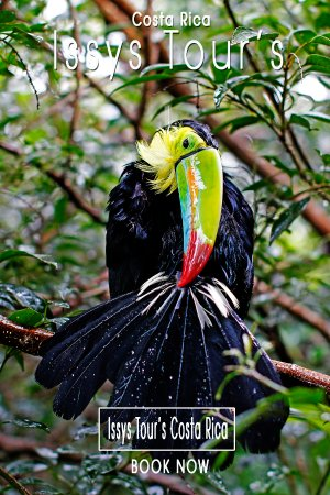 Issys Tours Costa Rica: Explore the Fauna of Costa Rica