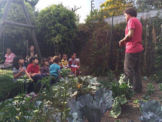 Piero jardinero bogot lo que se debe saber antes de for Aprender jardineria
