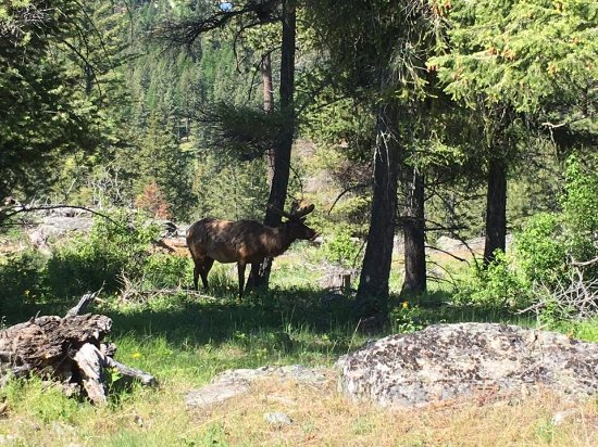 Averill's Flathead Lake Lodge: We spotted Elk in the nearby preserve