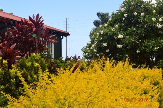Kalaheo, ฮาวาย: Grounds
