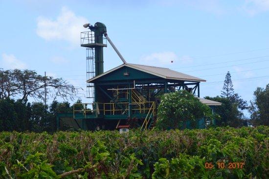 Kalaheo, ฮาวาย: Plantation