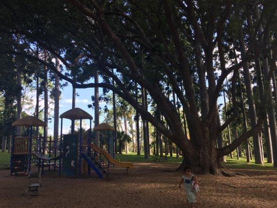 Rockhampton Botanik Bahçeleri ve Hayvanat Bahçesi: photo7.jpg