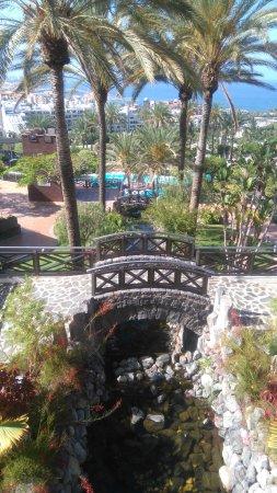 Gardens picture of melia jardines del teide costa adeje tripadvisor - Jardines del teide ...
