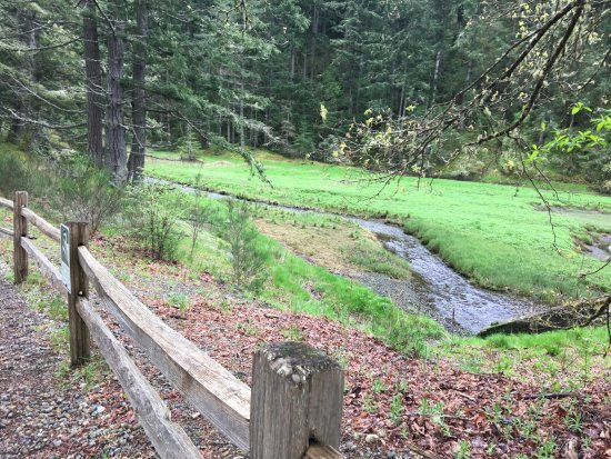 Dupont, WA: Sequalitchew Creek Trail Head