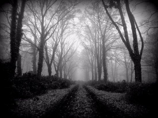 Bohnicky cemetery of fools