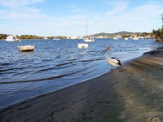 Noosaville, Australia: photo4.jpg