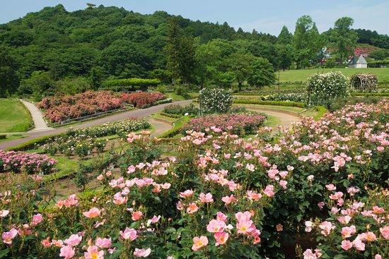 Ibaraki Flower Park