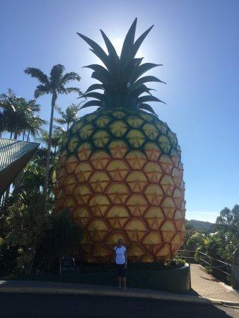 The Big Pineapple: photo0.jpg