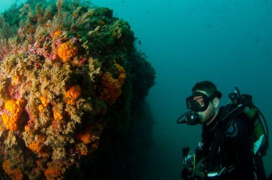 David Diving