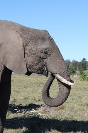 Knysna Elephant Park: Yum