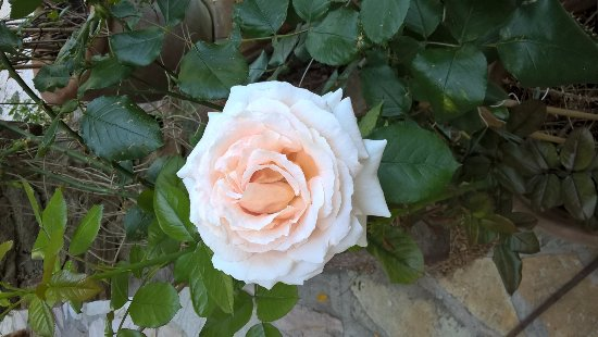 La Belle Isnarde: giardino