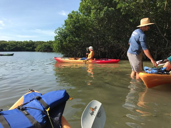 Sea Life Kayak Adventures: Just taking off from the kayak base; my first few paddles!
