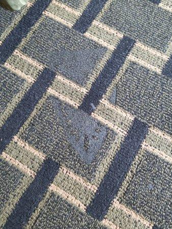 North Charleston Inn : Iron burn on carpet in room
