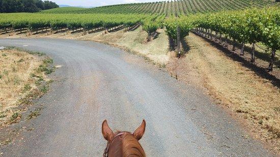 Healdsburg, CA: riding through the vineyards