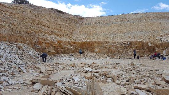 Fossil Safari at Warfield Fossil Quarries