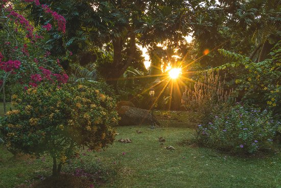 Cote Sud : View of the sun setting from the garden
