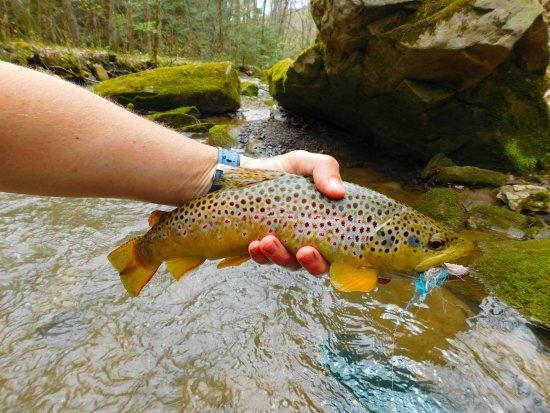 Pennsylvania: PA brown trout