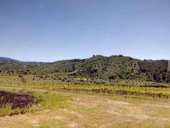 Cornudella de Montsant, Spanje: viñedos