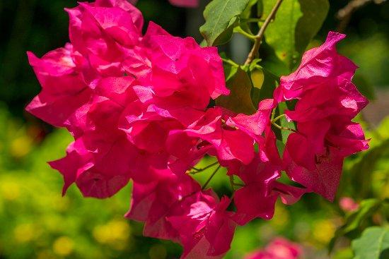 Cote Sud : Garden