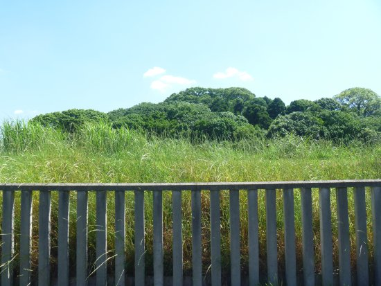 Fujiidera, Japan: 古墳の一部