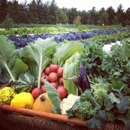 Indiantown, Floride : Fresh veggies when we are in season
